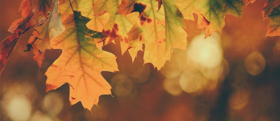 Autumn Leaves image slide