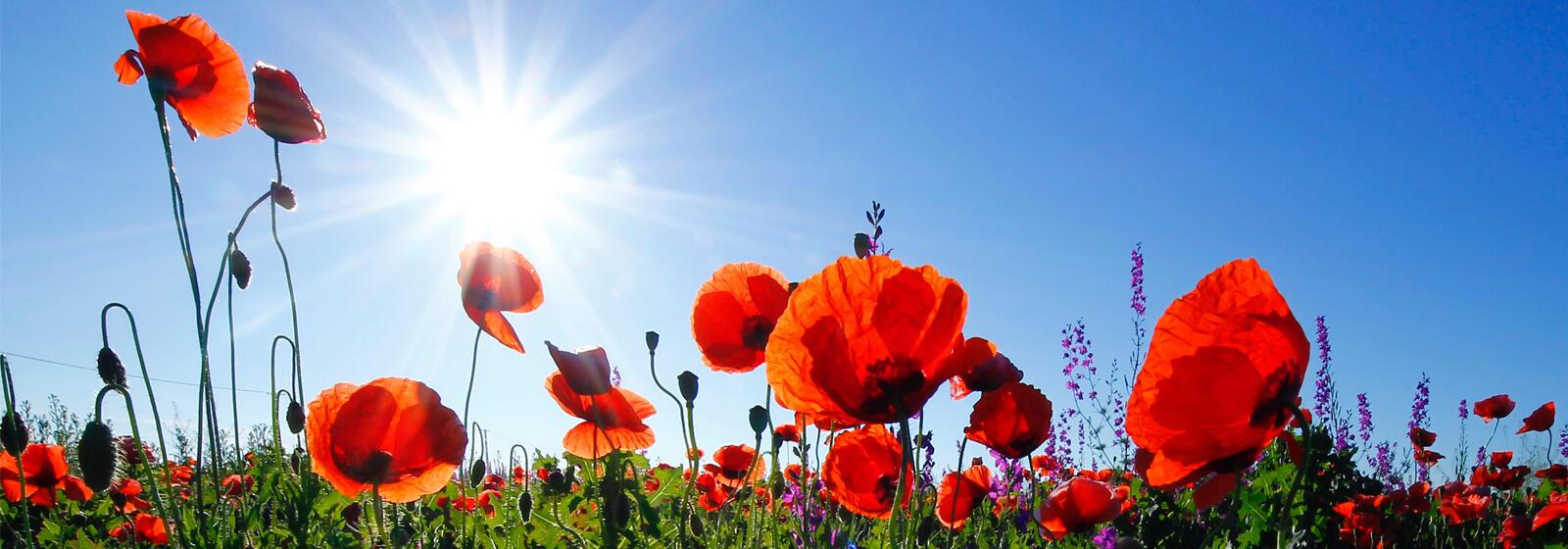 Spring flowers image slide